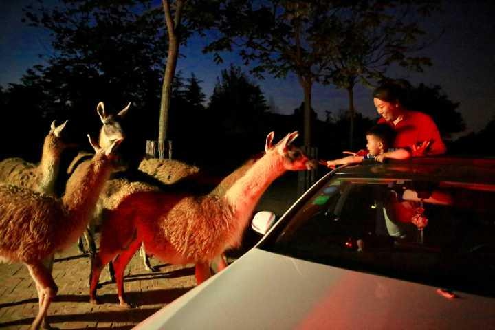 端午小长假,来济野首次探秘夜间动物世界